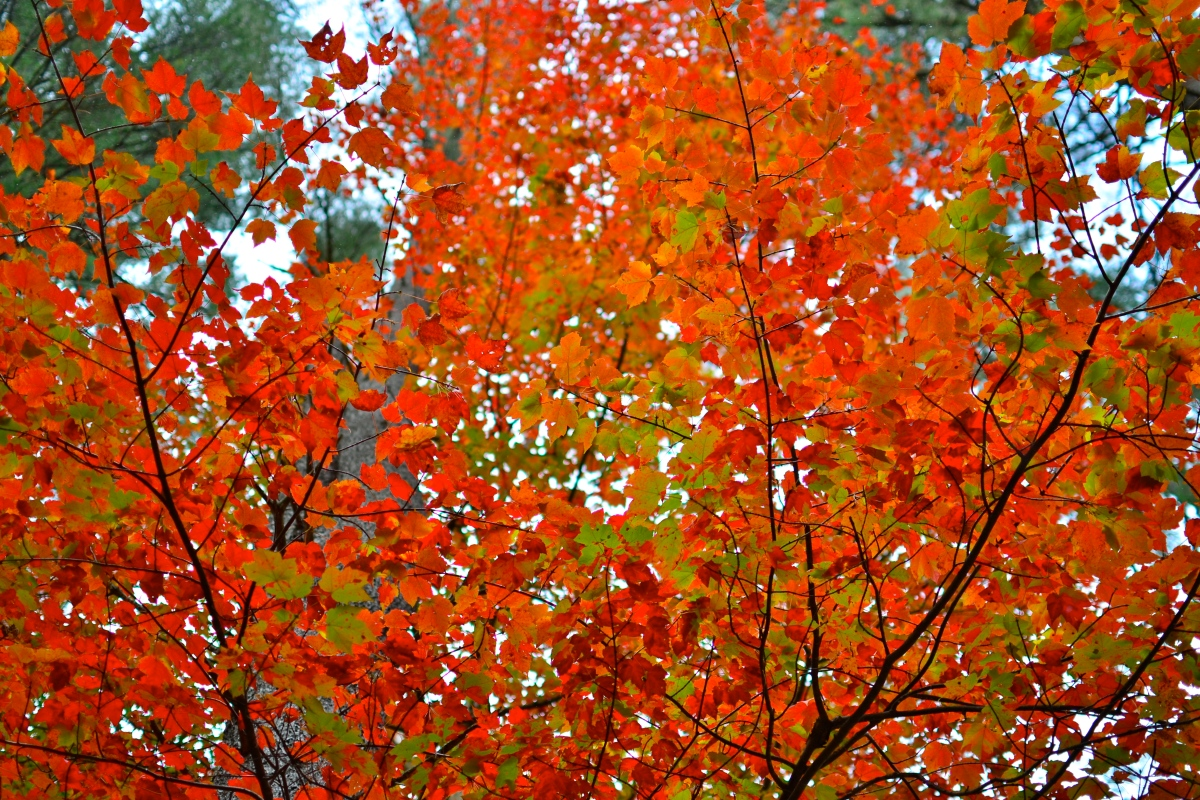 The Colors of Autumn – pursuit of food